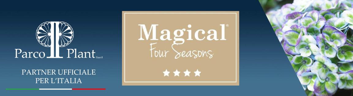 Hydrangee-Magical-Four-Seasons-Parco-Plant-01