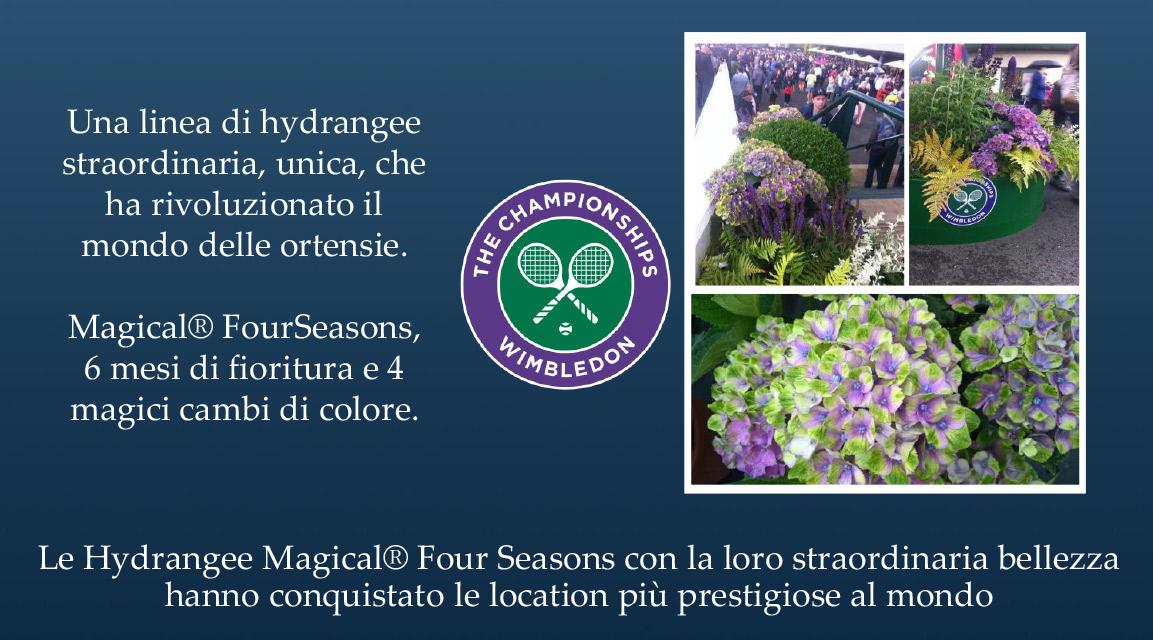 Hydrangee-Magical-Four-Seasons-Parco-Plant-04